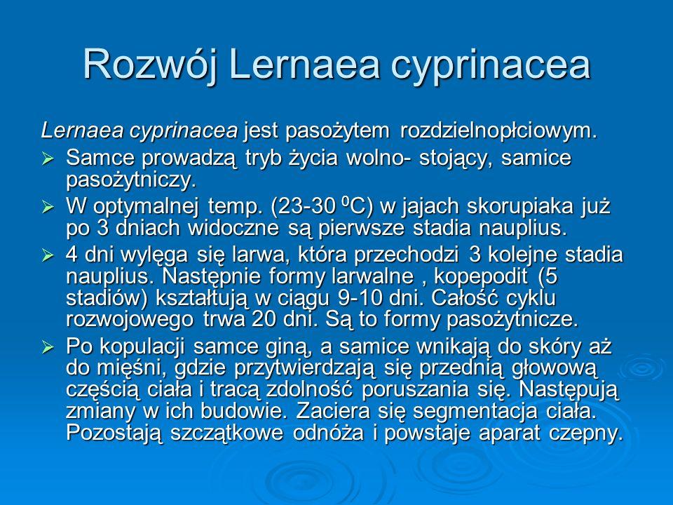 Rozwój Lernaea cyprinacea Lernaea cyprinacea jest pasożytem rozdzielnopłciowym. Samce prowadzą tryb życia wolno- stojący, samice pasożytniczy. Samce p