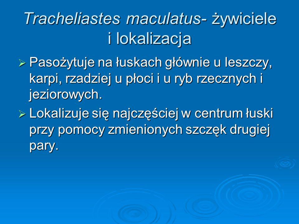 Tracheliastes maculatus- żywiciele i lokalizacja Pasożytuje na łuskach głównie u leszczy, karpi, rzadziej u płoci i u ryb rzecznych i jeziorowych. Pas