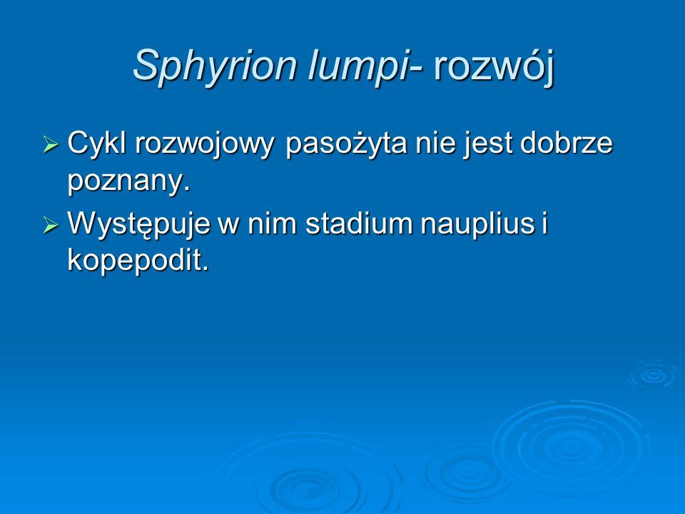 Sphyrion lumpi- rozwój Cykl rozwojowy pasożyta nie jest dobrze poznany. Cykl rozwojowy pasożyta nie jest dobrze poznany. Występuje w nim stadium naupl
