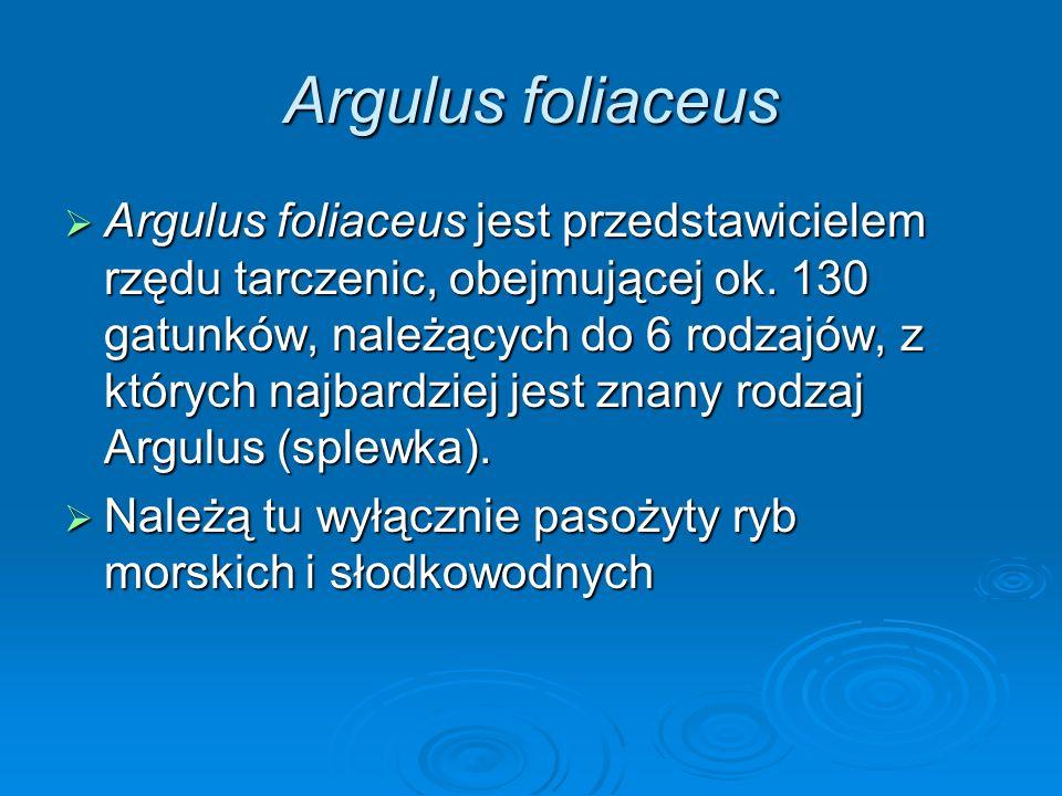 Argulus foliaceus Argulus foliaceus jest przedstawicielem rzędu tarczenic, obejmującej ok. 130 gatunków, należących do 6 rodzajów, z których najbardzi
