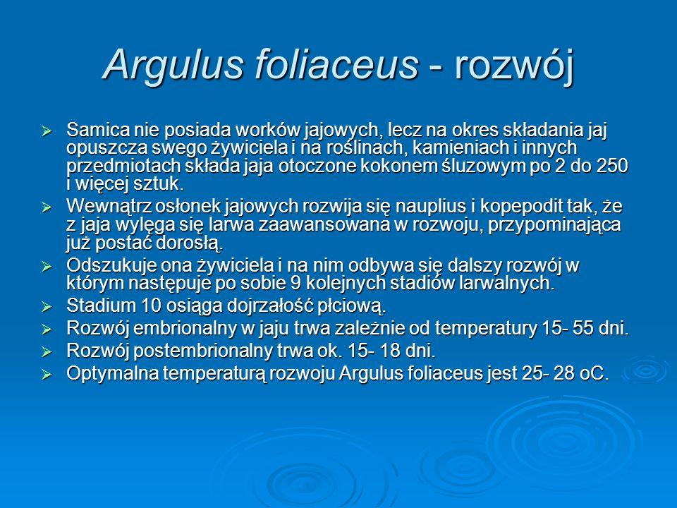 Argulus foliaceus - rozwój Samica nie posiada worków jajowych, lecz na okres składania jaj opuszcza swego żywiciela i na roślinach, kamieniach i innyc