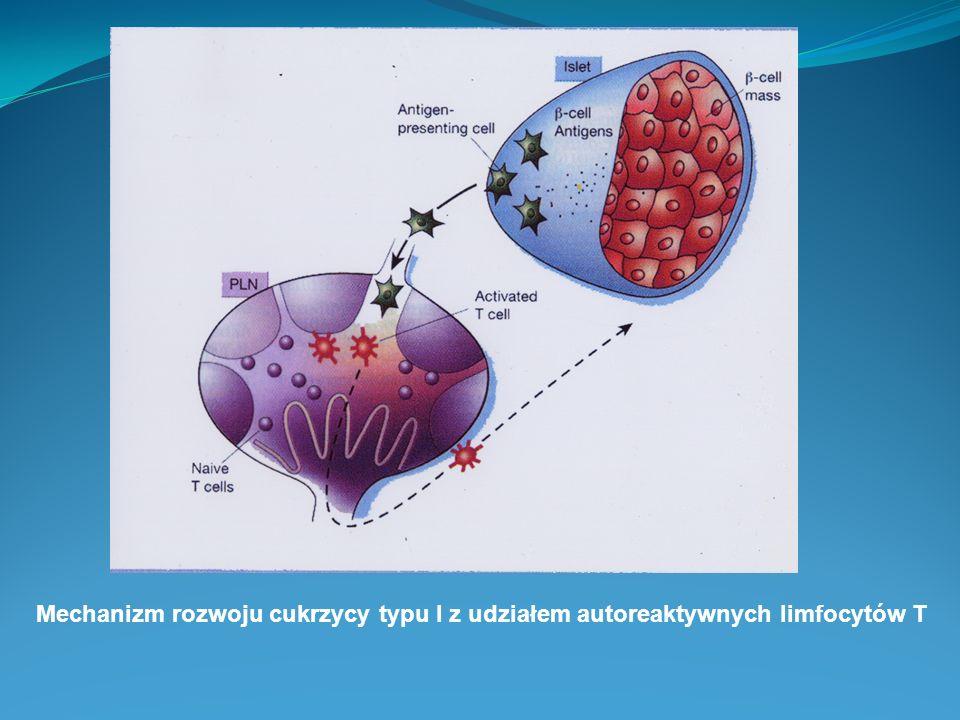 Mechanizm rozwoju cukrzycy typu I z udziałem autoreaktywnych limfocytów T