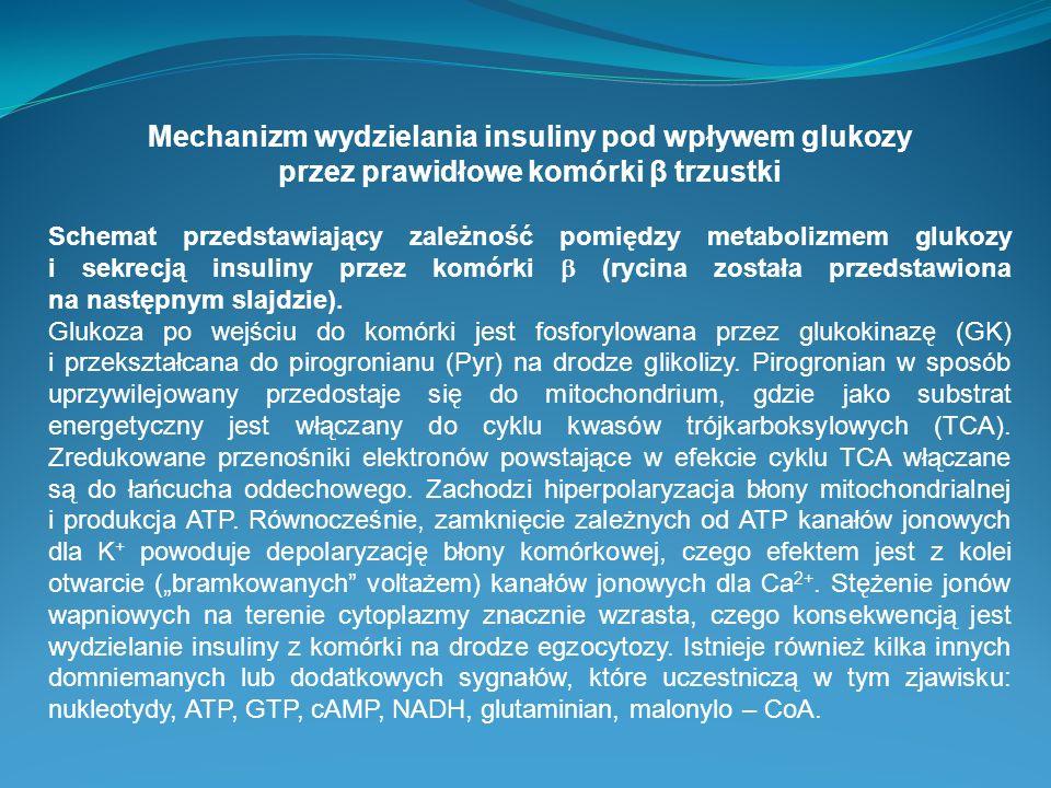 Mechanizm wydzielania insuliny pod wpływem glukozy przez prawidłowe komórki β trzustki Schemat przedstawiający zależność pomiędzy metabolizmem glukozy
