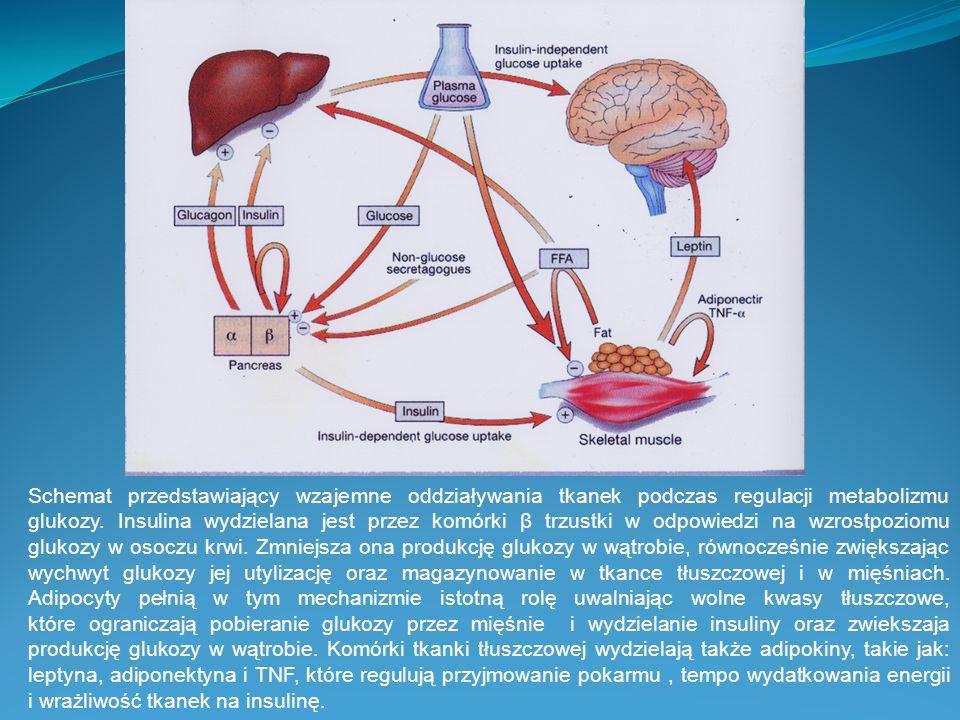 Schemat przedstawiający wzajemne oddziaływania tkanek podczas regulacji metabolizmu glukozy. Insulina wydzielana jest przez komórki β trzustki w odpow