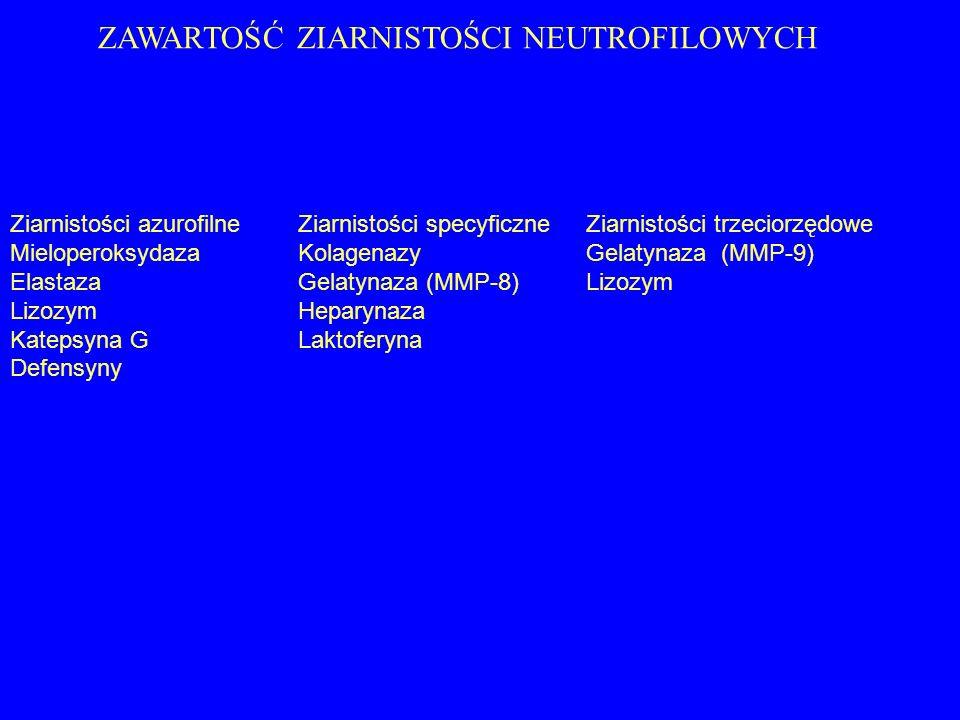 ZAWARTOŚĆ ZIARNISTOŚCI NEUTROFILOWYCH Ziarnistości azurofilneZiarnistości specyficzneZiarnistości trzeciorzędowe MieloperoksydazaKolagenazyGelatynaza
