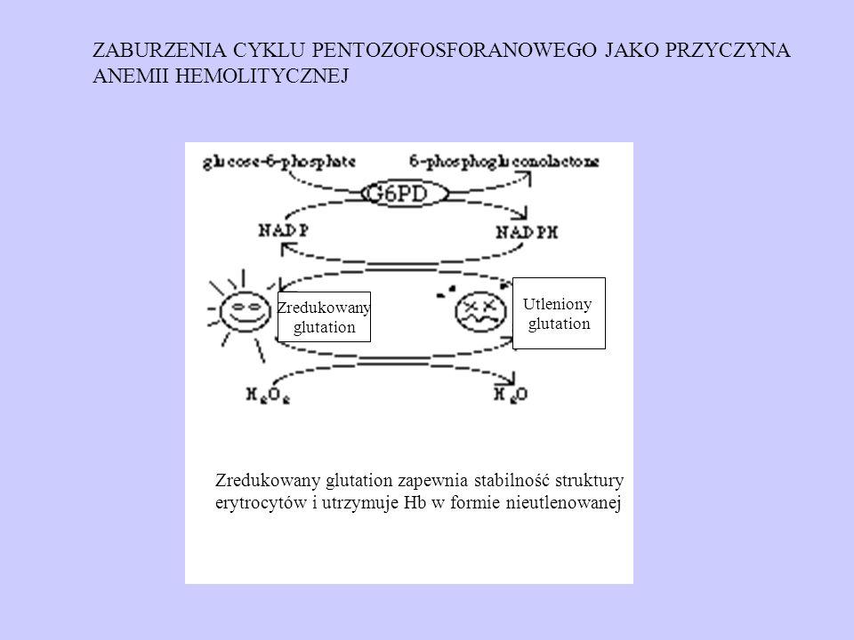 ZABURZENIA CYKLU PENTOZOFOSFORANOWEGO JAKO PRZYCZYNA ANEMII HEMOLITYCZNEJ Zredukowany glutation Utleniony glutation Zredukowany glutation zapewnia sta
