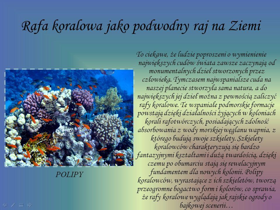 Formy rafy koralowej W zależności od miejsca powstawania rafy tworzą różne formy, wyróżniamy 3 główne rodzaje raf koralowych: Przybrzeżne Rafy barierowe Atole PRZYBRZEŻNA RAFA KORALOWA