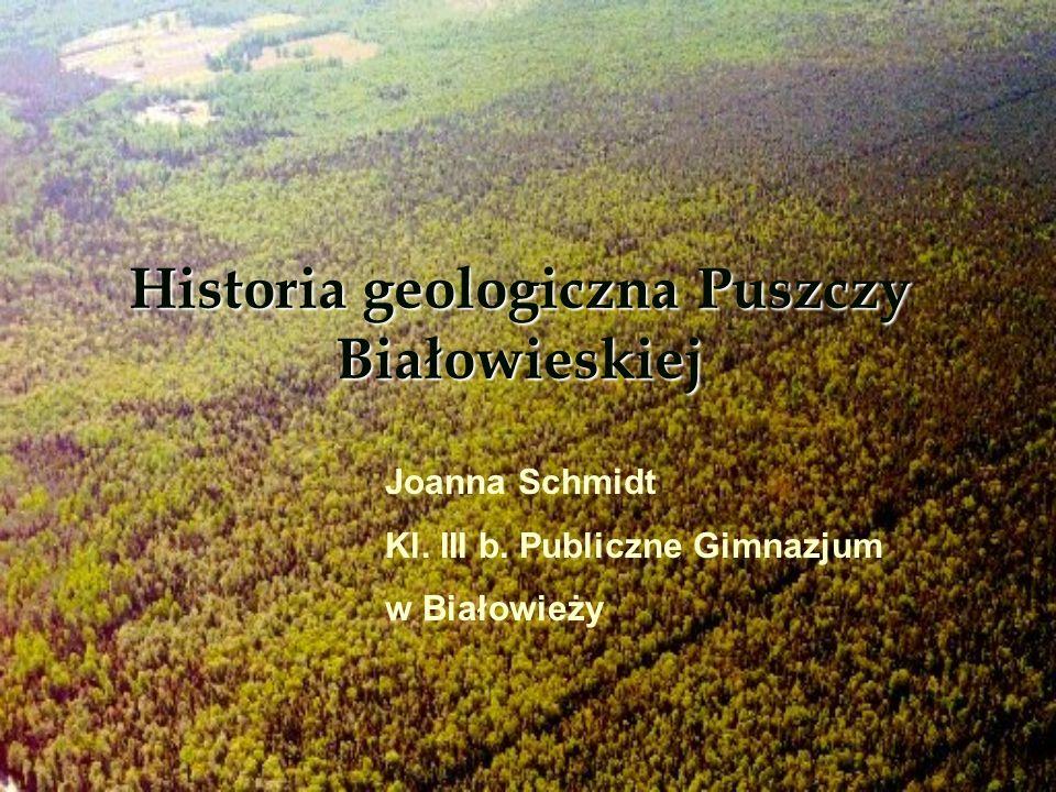 Historia geologiczna Puszczy Białowieskiej Joanna Schmidt Kl. III b. Publiczne Gimnazjum w Białowieży