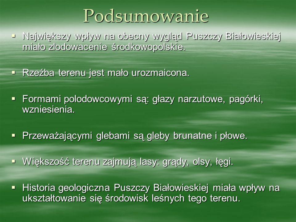 Podsumowanie Największy wpływ na obecny wygląd Puszczy Białowieskiej miało zlodowacenie środkowopolskie. Największy wpływ na obecny wygląd Puszczy Bia