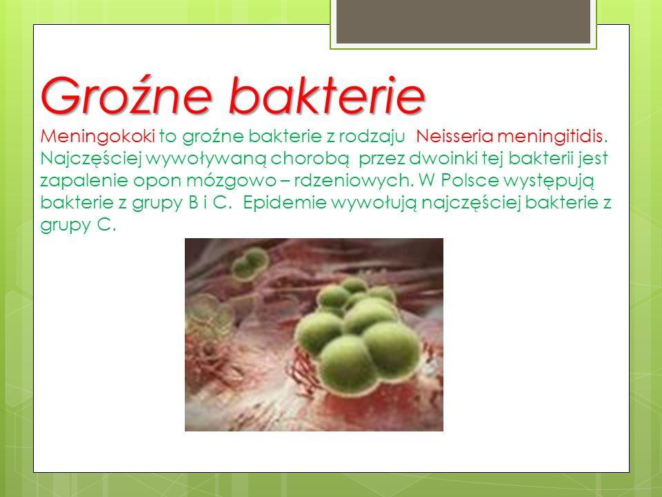Groźne bakterie Groźne bakterie Meningokoki to groźne bakterie z rodzaju Neisseria meningitidis. Najczęściej wywoływaną chorobą przez dwoinki tej bakt