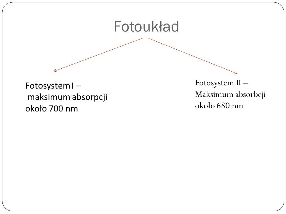 Fotoukład Fotosystem I – maksimum absorpcji około 700 nm Fotosystem II – Maksimum absorbcji około 680 nm