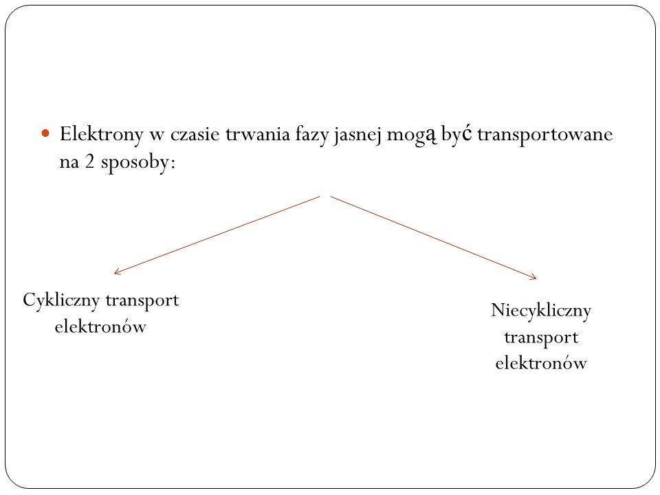 Elektrony w czasie trwania fazy jasnej mog ą by ć transportowane na 2 sposoby: Cykliczny transport elektronów Niecykliczny transport elektronów