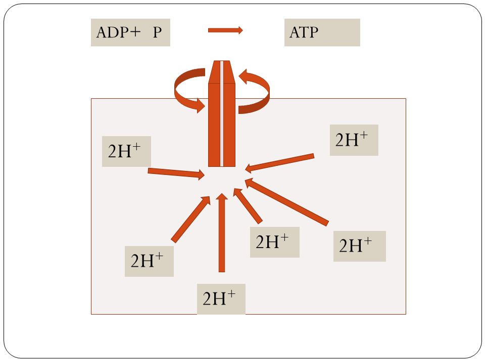 ADP+ATPP