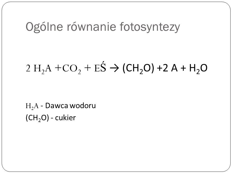 Ogólne równanie fotosyntezy 2 H 2 A +CO 2 + E Ś (CH 2 O) +2 A + H 2 O H 2 A - Dawca wodoru (CH 2 O) - cukier