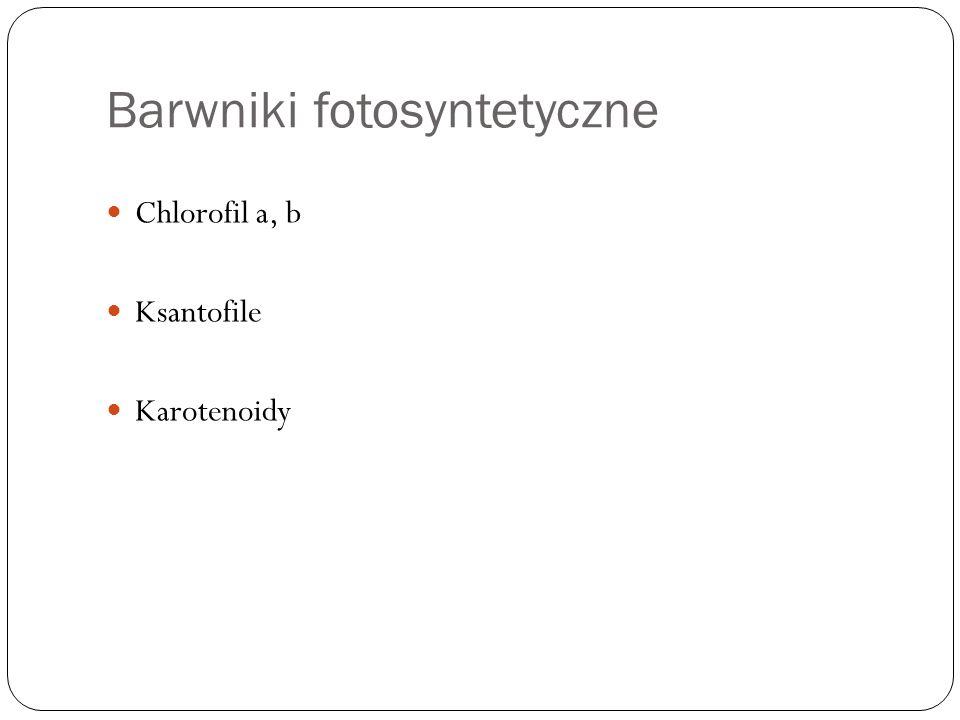 Barwniki fotosyntetyczne Chlorofil a, b Ksantofile Karotenoidy