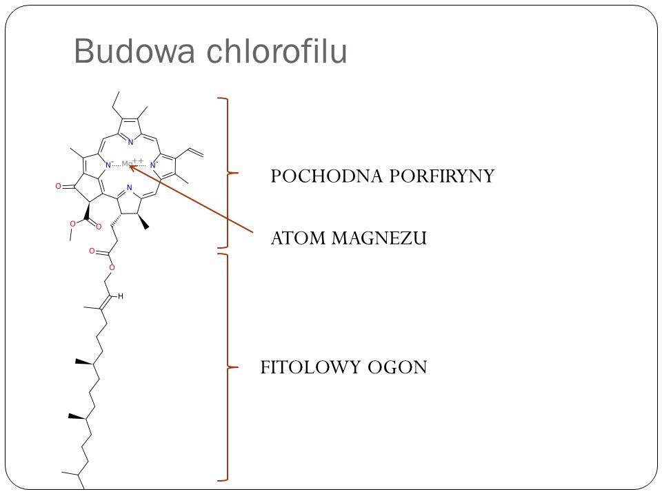 Budowa chlorofilu FITOLOWY OGON POCHODNA PORFIRYNY ATOM MAGNEZU