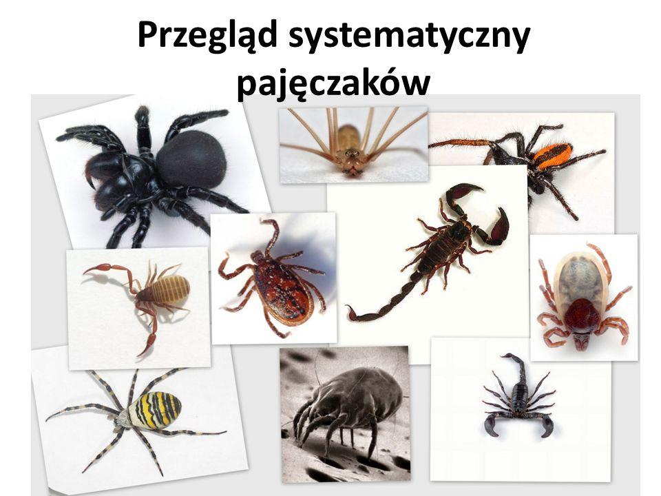 Przegląd systematyczny pajęczaków