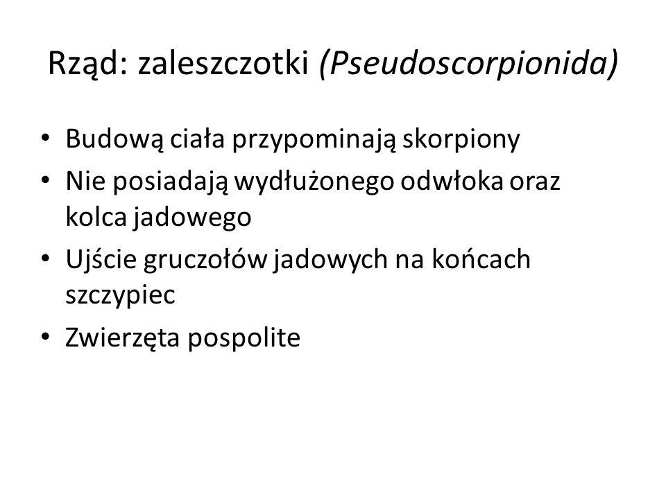 Rząd: zaleszczotki (Pseudoscorpionida) Budową ciała przypominają skorpiony Nie posiadają wydłużonego odwłoka oraz kolca jadowego Ujście gruczołów jado