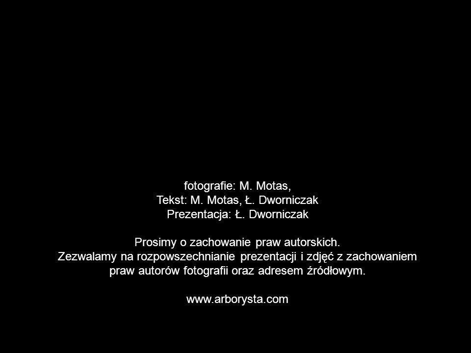 fotografie: M. Motas, Tekst: M. Motas, Ł. Dworniczak Prezentacja: Ł. Dworniczak Prosimy o zachowanie praw autorskich. Zezwalamy na rozpowszechnianie p