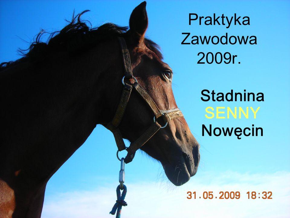 Praktyka Zawodowa 2009r. Stadnina SENNY Nowęcin