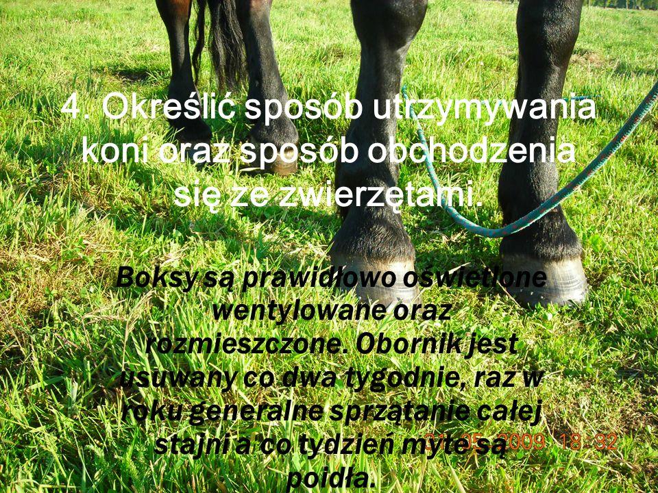 4.Określić sposób utrzymywania koni oraz sposób obchodzenia się ze zwierzętami.