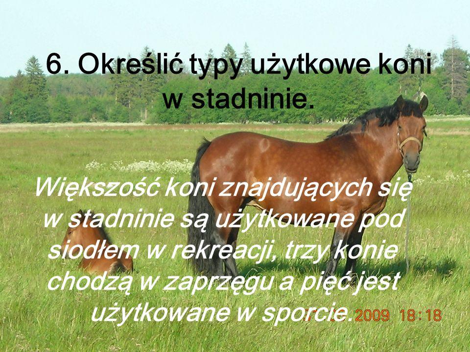 6.Określić typy użytkowe koni w stadninie.
