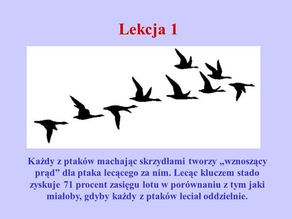 Lekcja 1 Każdy z ptaków machając skrzydłami tworzy wznoszący prąd dla ptaka lecącego za nim. Lecąc kluczem stado zyskuje 71 procent zasięgu lotu w por