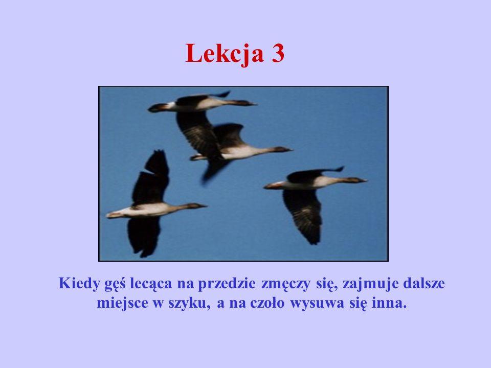 Lekcja 3 Kiedy gęś lecąca na przedzie zmęczy się, zajmuje dalsze miejsce w szyku, a na czoło wysuwa się inna.
