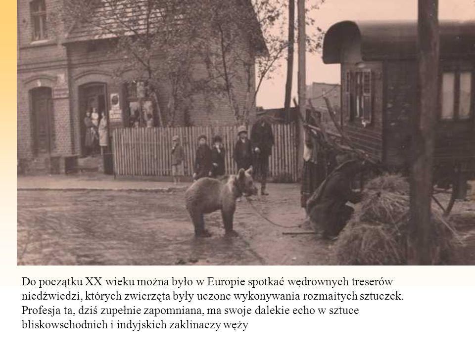 Do początku XX wieku można było w Europie spotkać wędrownych treserów niedźwiedzi, których zwierzęta były uczone wykonywania rozmaitych sztuczek. Prof