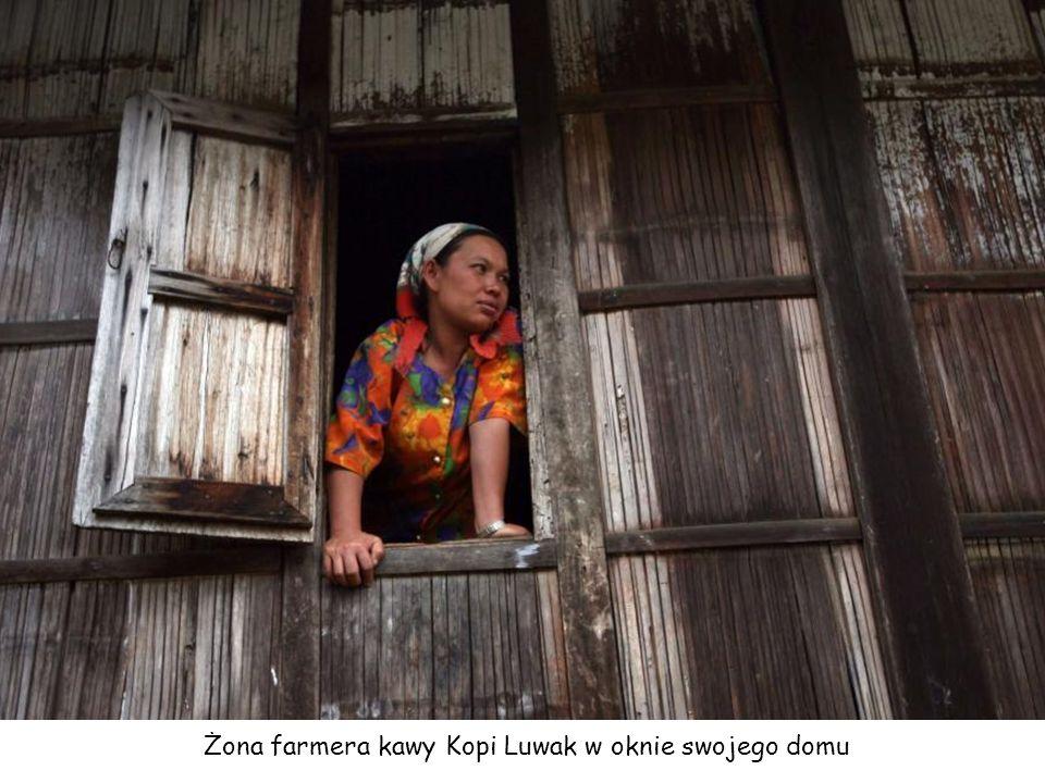 Farmer na Indonezji z łaskunem