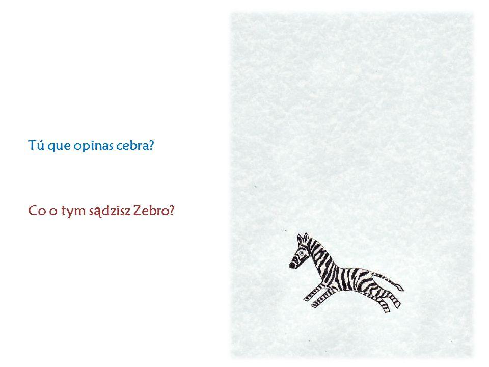 Tú que opinas cebra Co o tym s ą dzisz Zebro