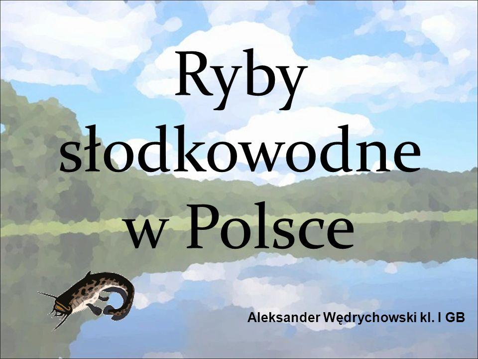 Ryby słodkowodne w Polsce Aleksander Wędrychowski kl. I GB