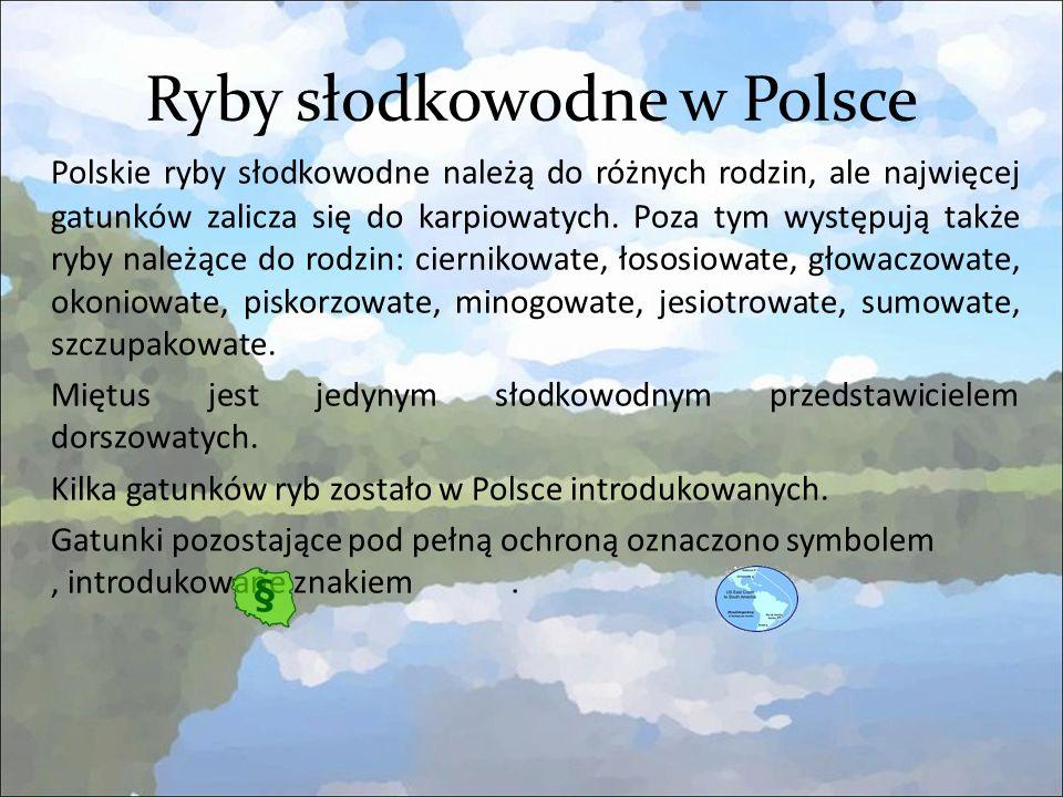 Ryby słodkowodne w Polsce Polskie ryby słodkowodne należą do różnych rodzin, ale najwięcej gatunków zalicza się do karpiowatych.