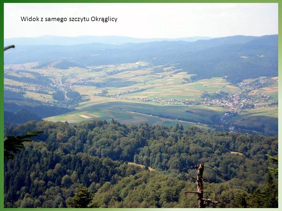 Widok z samego szczytu Okrąglicy