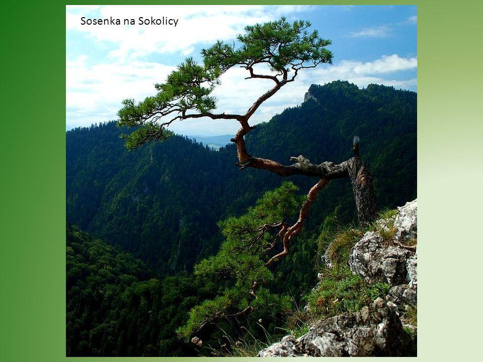 Pieniny (514.12) – pasmo górskie w południowej Polsce i północnej Słowacji, stanowiące najwyższą część długiego, porozdzielanego pasa skałek wapiennyc