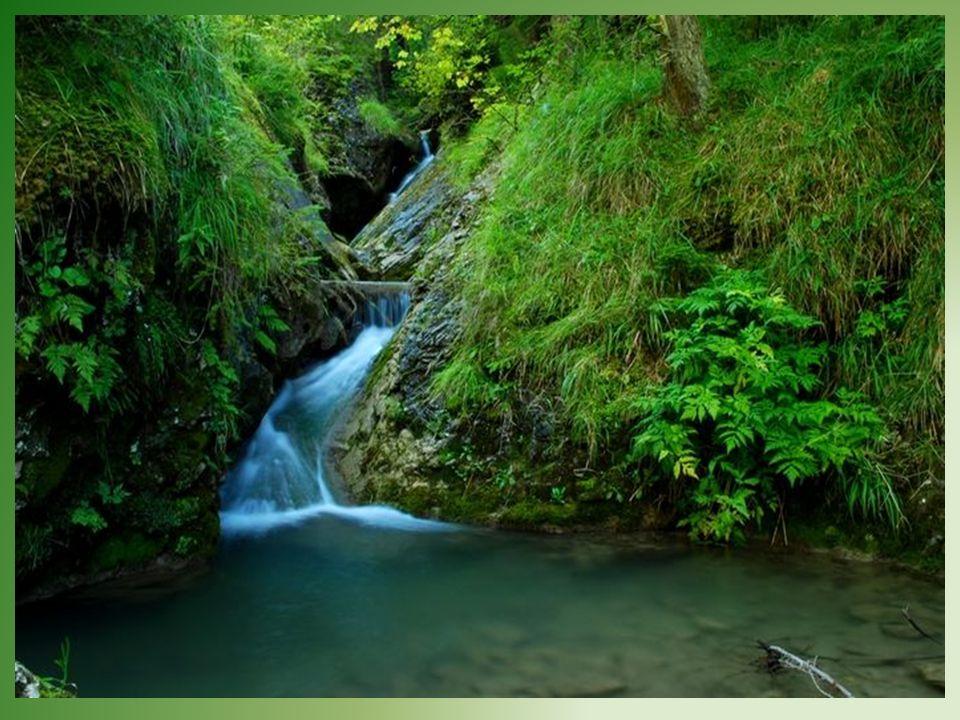 Wąwóz Homole - dołem płynie mały strumień tworzący miejscami miniaturowe wodospady. Wokół wznoszą się strome skały wąwozu.