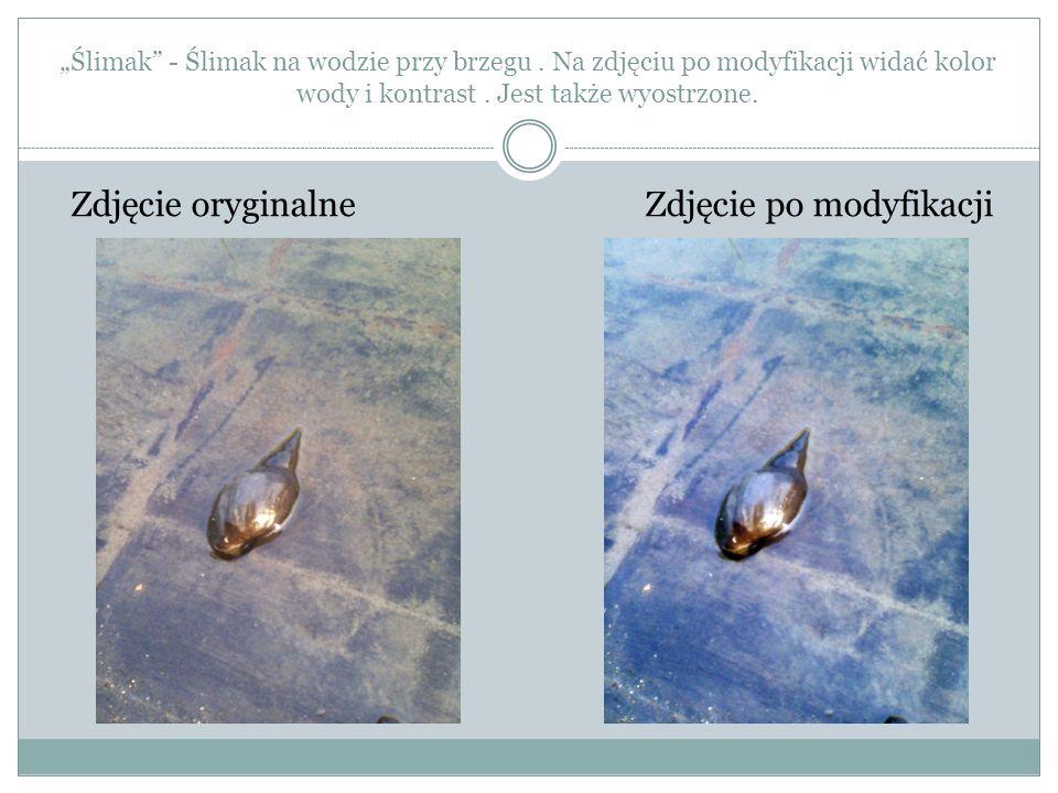 Ślimak - Ślimak na wodzie przy brzegu. Na zdjęciu po modyfikacji widać kolor wody i kontrast. Jest także wyostrzone. Zdjęcie oryginalne Zdjęcie po mod