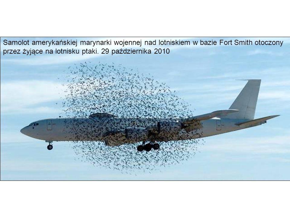 Samolot amerykańskiej marynarki wojennej nad lotniskiem w bazie Fort Smith otoczony przez żyjące na lotnisku ptaki. 29 października 2010