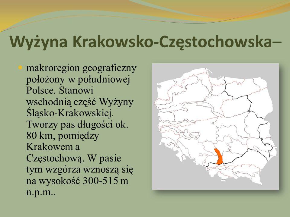Wyżyna Krakowsko-Częstochowska dzieli się na następujące makroregiony: Wyżynę Częstochowską Wyżynę Olkuską Rów Krzeszowicki Grzbiet Tenczyński Wyżyna Krakowsko-Częstochowska graniczy: od północy z Niziną Wielkopolską i Wyżyną Woźnicko-Wieluńską od zachodu z Wyżyną Śląską i Niziną Śląską od południa z Kotliną Sandomierską od wschodu z Wyżyną Małopolską.