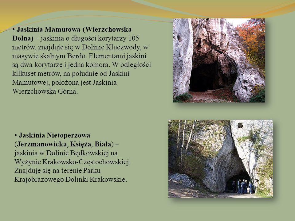 Jaskinia Mamutowa (Wierzchowska Dolna) – jaskinia o długości korytarzy 105 metrów, znajduje się w Dolinie Kluczwody, w masywie skalnym Berdo. Elementa