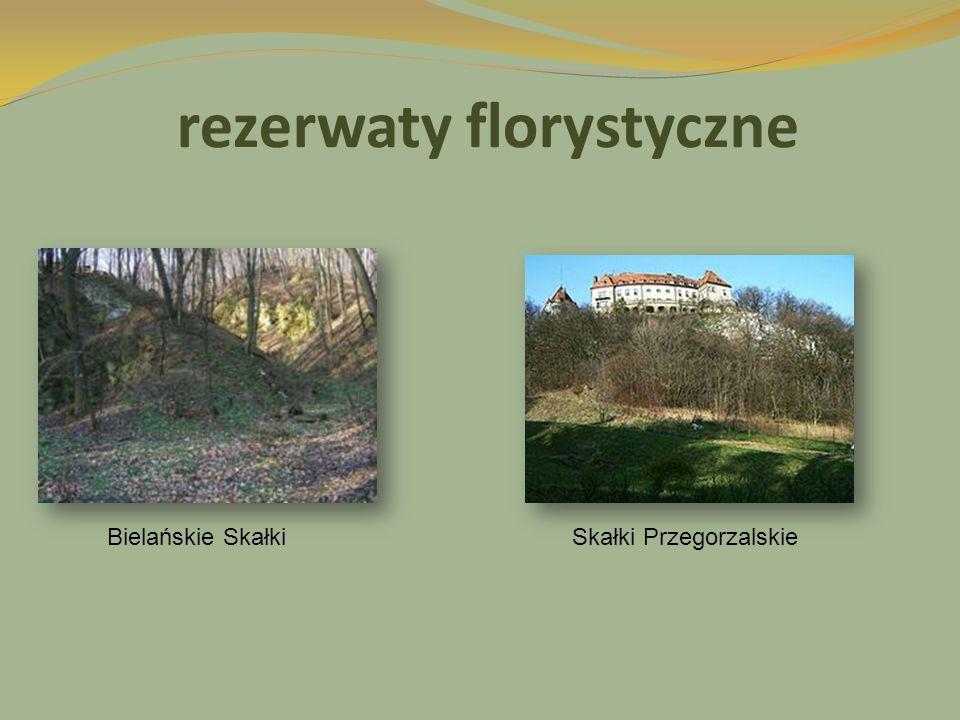 rezerwaty florystyczne Bielańskie SkałkiSkałki Przegorzalskie