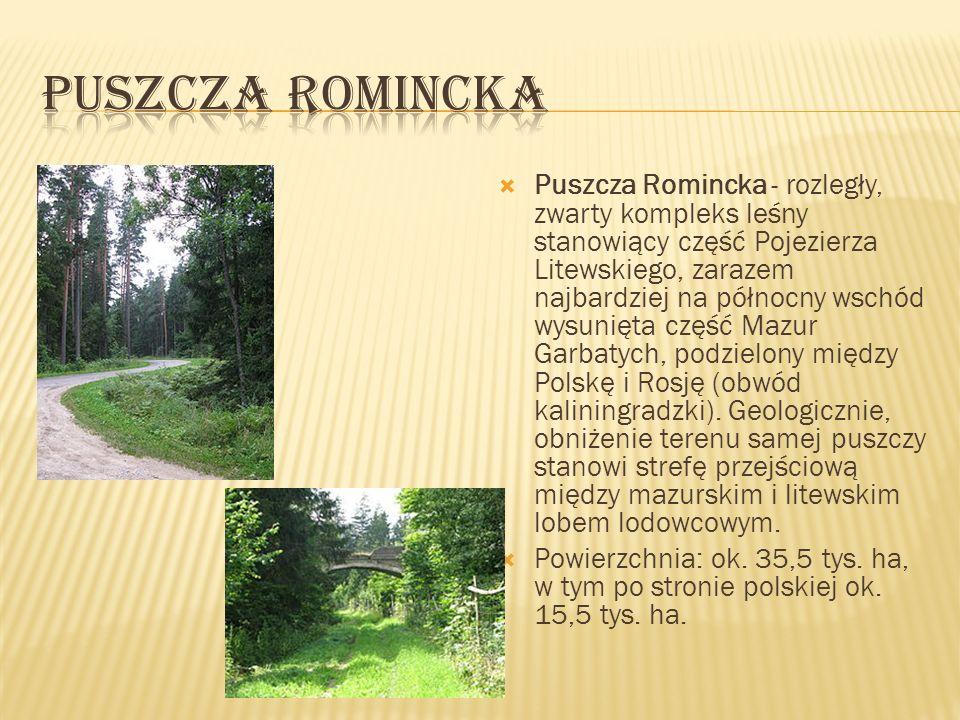 Puszcza Romincka - rozległy, zwarty kompleks leśny stanowiący część Pojezierza Litewskiego, zarazem najbardziej na północny wschód wysunięta część Maz