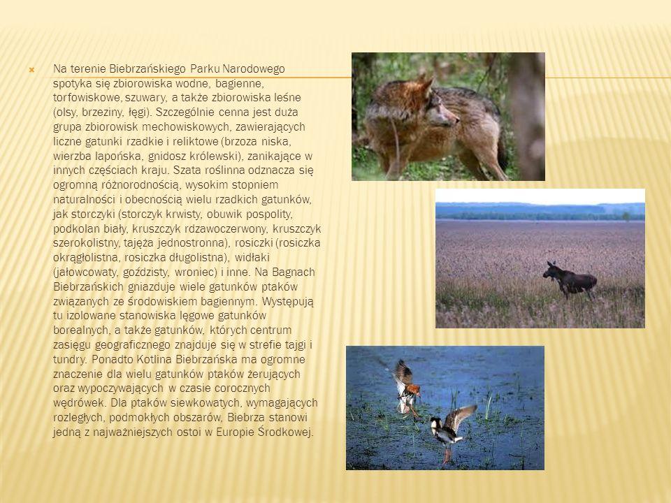 Na terenie Biebrzańskiego Parku Narodowego spotyka się zbiorowiska wodne, bagienne, torfowiskowe, szuwary, a także zbiorowiska leśne (olsy, brzeziny,