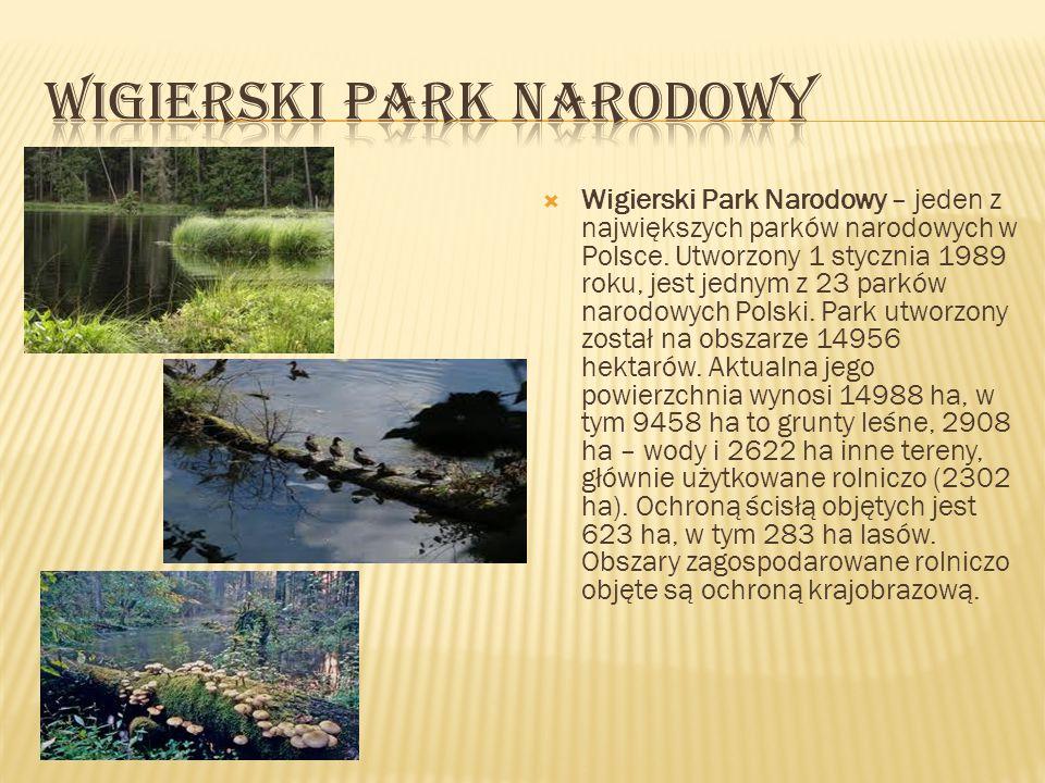 Wigierski Park Narodowy – jeden z największych parków narodowych w Polsce. Utworzony 1 stycznia 1989 roku, jest jednym z 23 parków narodowych Polski.