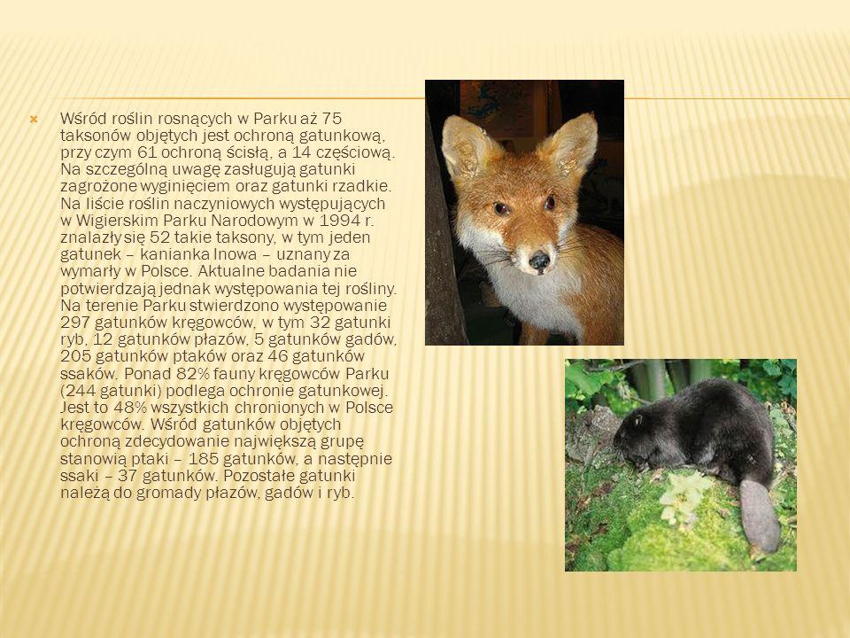 Wśród roślin rosnących w Parku aż 75 taksonów objętych jest ochroną gatunkową, przy czym 61 ochroną ścisłą, a 14 częściową. Na szczególną uwagę zasług
