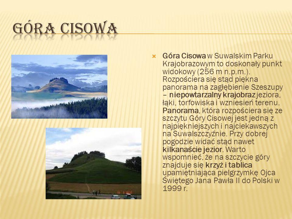 Góra Cisowa w Suwalskim Parku Krajobrazowym to doskonały punkt widokowy (256 m n.p.m.). Rozpościera się stąd piękna panorama na zagłębienie Szeszupy –