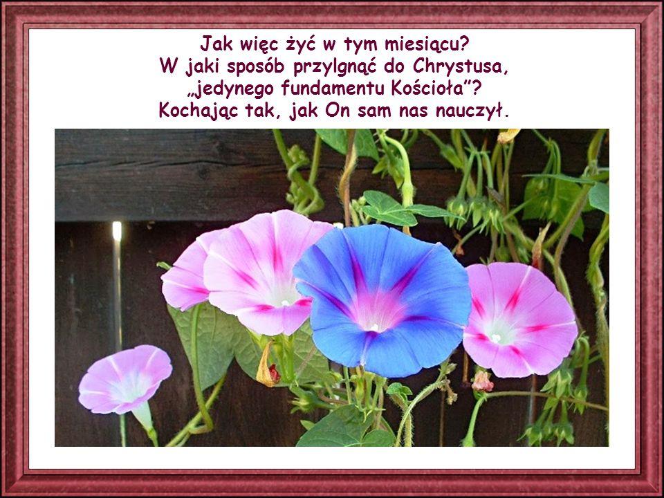 Rzeczywiście, każde Słowo Ewangelii, mimo że wyrażone różnymi ludzkimi pojęciami, jest Słowem Bożym, a ponieważ Bóg jest Miłością, każde Słowo jest miłością.