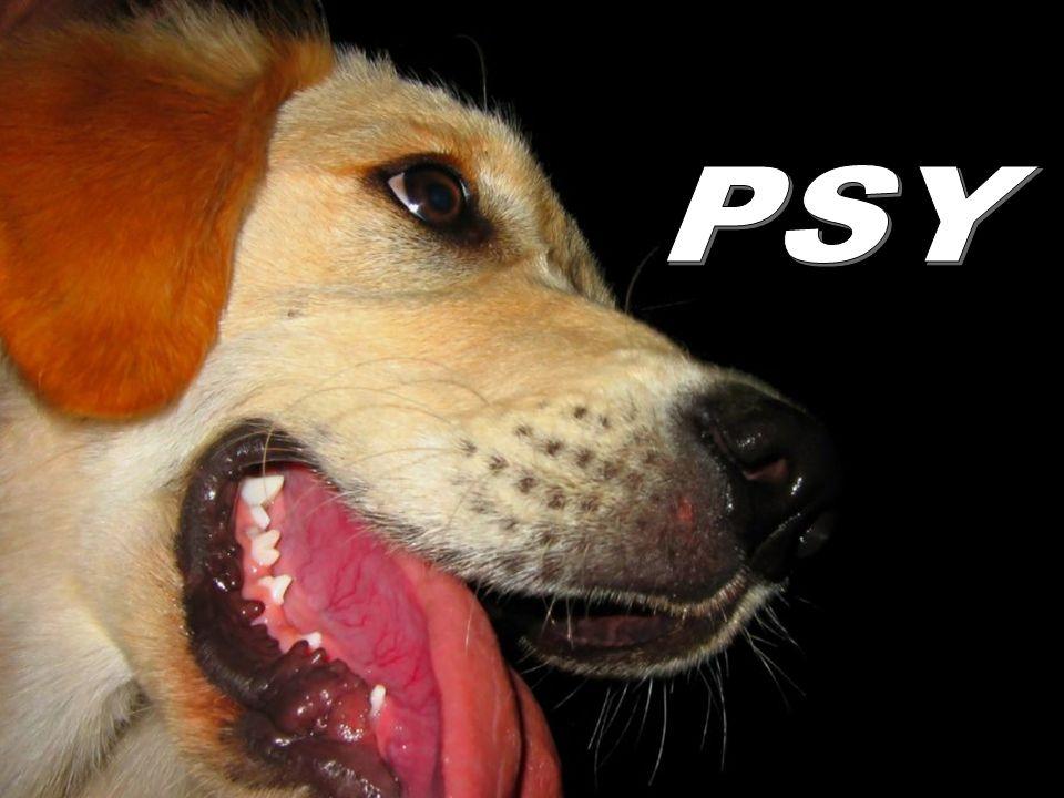 Można poowiedzieć dla psa jakiekolwiek głupstwo i on popatrzy chcąc powiedzieć: Naprawdę masz rację.