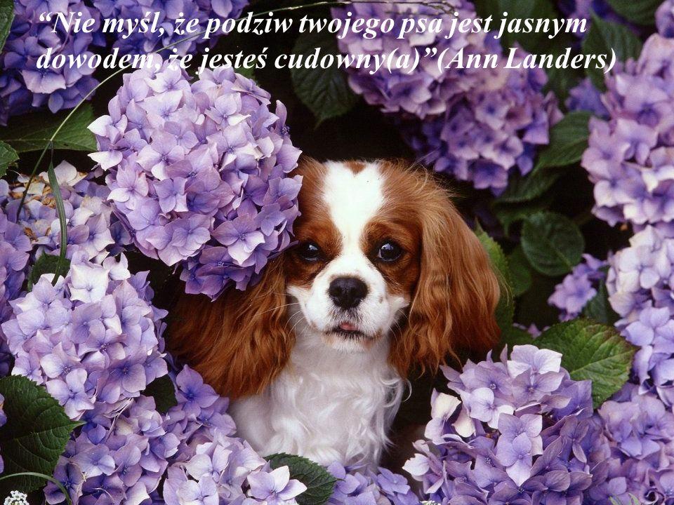 Jest wstyd dla nas ludzi, że pies jest najlepszym przyjacielem człowieka, i człowiek jest najgorszym przyjacielem psa. ( Eduardo Lamazón)