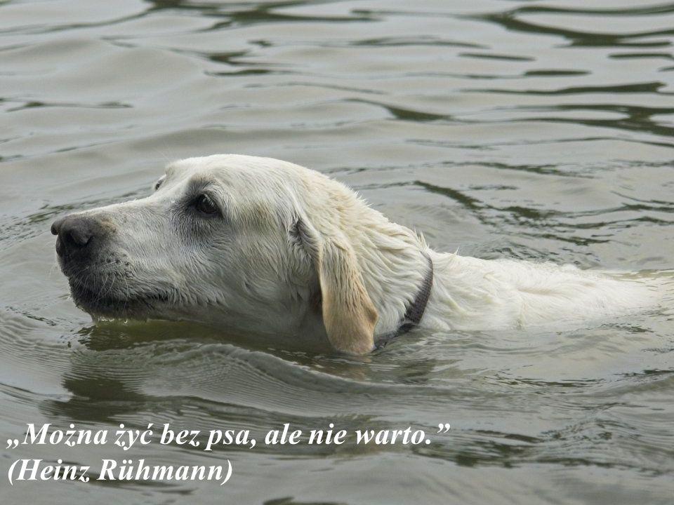 Pies jest jedynym na ziemi, który będzie ciebie kochał więcej aniżeli ty kochasz siebie samego (samej).(Josh Billings)